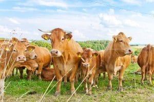 Aufhebungsvertrag;: Ein Pachtvertrag, ob Landwirtschaft, Gastronomie oder Kleingarten, kann durch einen solchen beendet werden.