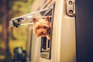 Dürfen Vermieter Hunde verbieten? Im Mietvertrag darf ein Hund nicht grundsätzlich ausgeschlossen sein.