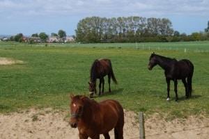 Die fristlose Kündigung von einem Pferdeeinstellungsvertrag bedarf eines triftigen Grundes.