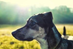 Hundebesuch in der Mietwohnung darf ebenfalls nicht grundsätzlich untersagt sein.
