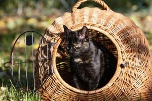 Eine Katze kann als Kleintier gelten. Im Mietrecht ist das oft auch eine Einzelfallentscheidung.