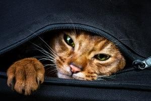 Katzenhaltung in der Mietwohnung darf nicht grundsätzlich und pauschal untersagt sein.