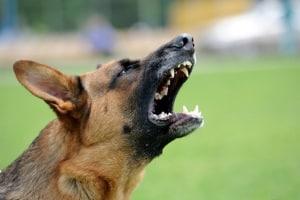 Lärmbelästigung durch Hundegebell ist ein häufiger Grund für eine Mietminderung.