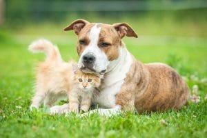 Das Mietrecht regelt, welche Haustiere gehalten werden dürfen.