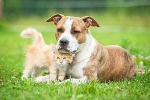 Mietrecht Wann Sind Haustiere Erlaubt Mietrecht 2018