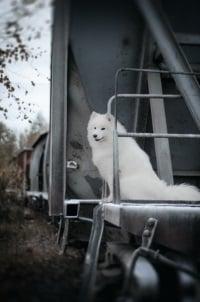 Vermieter: Ein pauschales Haustierverbot kann er nicht verhängen.